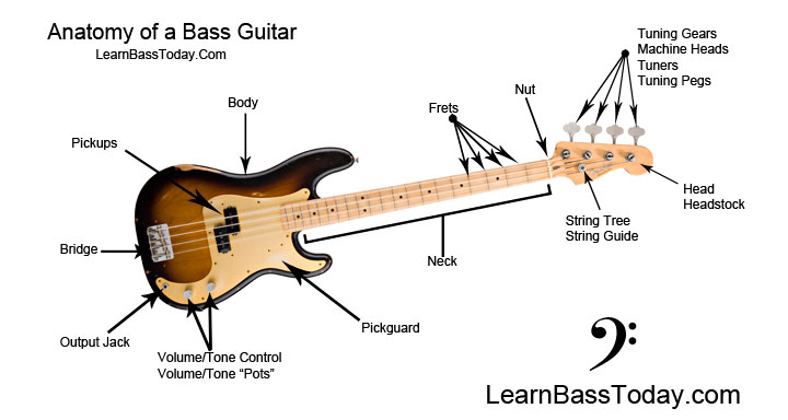 anatomy of a 4 string bass
